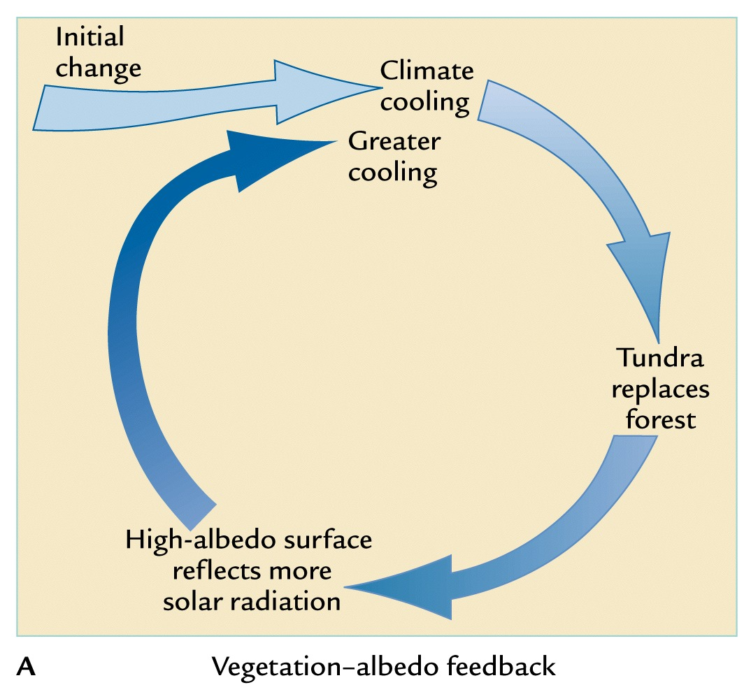 negative feedback What is the difference between positive and negative feedback many molecular and physiological processes are controlled by feedback mechanisms in a feedback loop the product of a process.