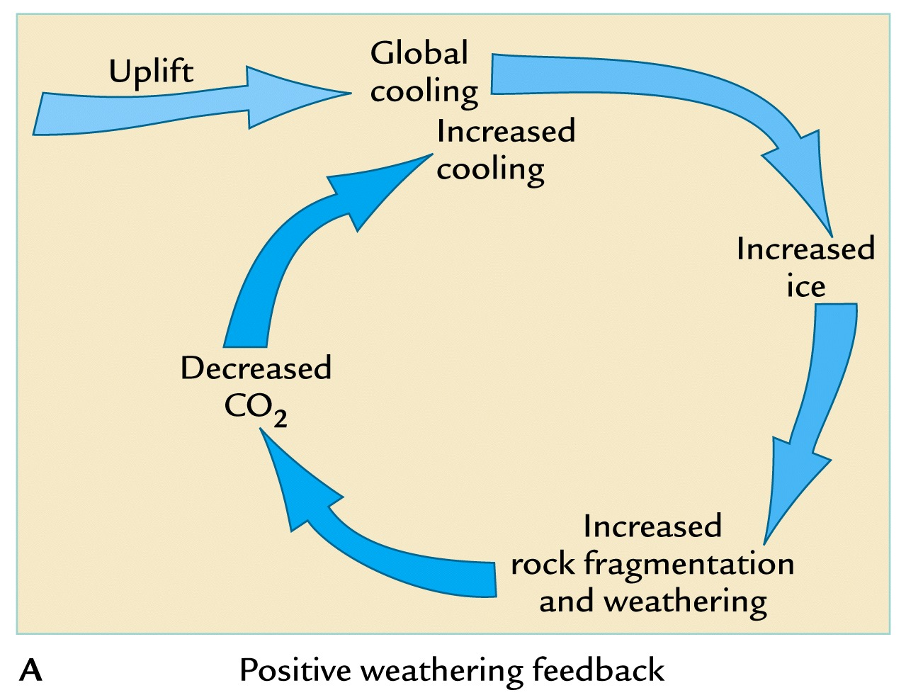 Carbon Cycle Diagram Kids | Free Collection Of Pictures Of The Water ...