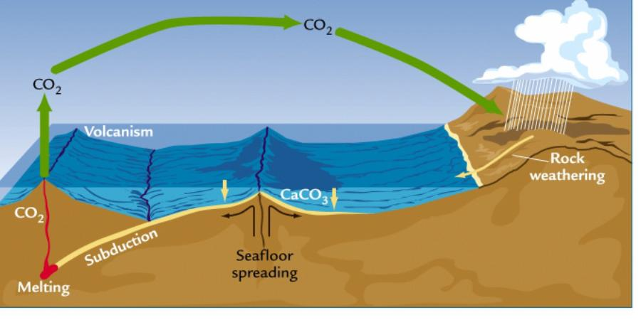 diagram of the carbon cycle diagram of the nitrogen cycle in nature #3